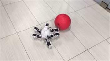 DJ's Six Hexapod Robot Tracking Ball